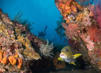Pulau Nusa Penida adalah sebuah pulau tersendiri yang ada di wilayah Bali. Pulau tersebut dibagi menjadi 3 bagian wilayah. Barat, Selatan dan Timur. Dari ke tiga bagian wilayah pulau, banyak sekali spot-spot wisata yang menjadi daya tarik bagi pengunjung.